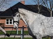 Hest til salg - CATALEYA