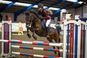 Hest til salg - Bøgelys Bravour