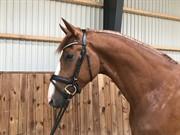 Horse for sale - ZANTINI DWB