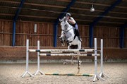 Horse for sale - HUSSMANNS SIR RUBIN