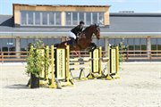 Horse for sale - VELAGERGAARDS CASSIOPEIA