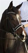 Hest til salg - FEMME ROYAL