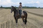 Horse for sale - Rønbjerg's Ma Ranelli