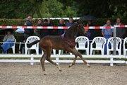 Horse for sale - KALHAVE'S MISS DIVINE