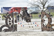 Horse for sale - Sarken Stephany