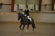 Hest til salg - VESTERGAARDS KASHMIR