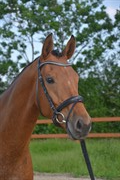 Horse for sale - SOLKÆRS MOULINS