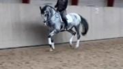 Hest til salg - CLASSIC INSPIRATION