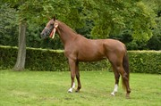 Horse for sale - MASKEDALS DIRTY DIANA