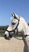 Horse for sale - LYNGVEJENS KENZO