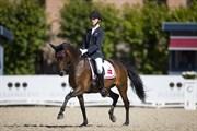 Hest til salg - LILO L.