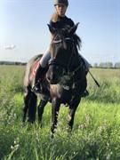 Horse for sale - ELMHOLTS JOSEFINE