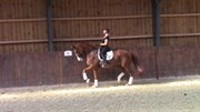 Horse for sale - CLARRICE