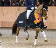 Hest til salg - JP