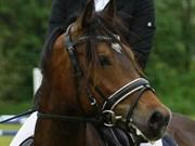 Horse for sale - STEMAR'S MAGIC MELIH