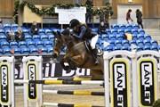 Horse for sale - GORTGLAS LUCKY STRIKE