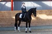 Hest til salg - SUNDORFS TAYLOR
