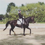 Horse for sale - LAMOUR