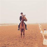 Horse for sale - ELITE L