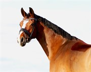Horse for sale - VLADYS BABY