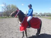 Horse for sale - KENTRIS ATHENE