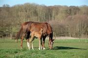 Horse for sale - RAVENNA