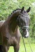 Horse for sale - WESTSIDE'S DÉJÀ-VU