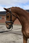 Horse for sale - KOPPARKULLA OLIVER (SWB)