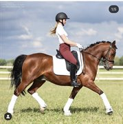 Horse for sale - Lundgårds Nano