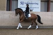 Hest til salg - ØRSBJERGGÅRDS ZIDANE