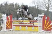 Hest til salg - KATRINEBJERGS LUIGI