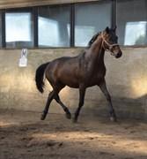 Horse for sale - DIOR VRÅ AA