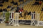 Horse for sale - Tattygar Dexter