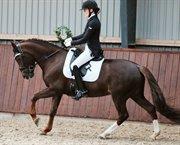 Horse for sale - STEGSTEDGAARDS ANNABELL