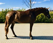 Horse for sale - DORTHEASMINDES VANESSA