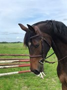 Horse for sale - STARLIGHT