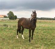 Horse for sale - RIHANNA
