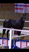 Horse for sale - CHESTER