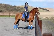 Horse for sale - DEZIMA