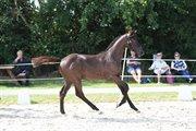 Horse for sale - BUTTERHILL'S TOTAL JOY