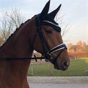 Horse for sale - DANSER UNIK