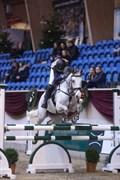 Hest til salg - RINALDO TT
