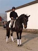 Horse for sale - LOUIS VUITTON