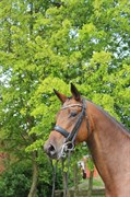 Horse for sale - BE' FUN
