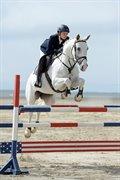 Horse for sale - KURUPS CORONA
