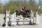Horse for sale - SILVANO