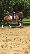 Horse for sale - BJEDSTRUPLUNDS SUNLINE