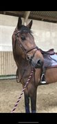 Horse for sale - Cherry Vally Premier