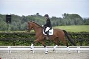 Hest til salg - BECK'S ZO FINE