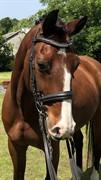Horse for sale - MR. LOU-BI-LIGHT